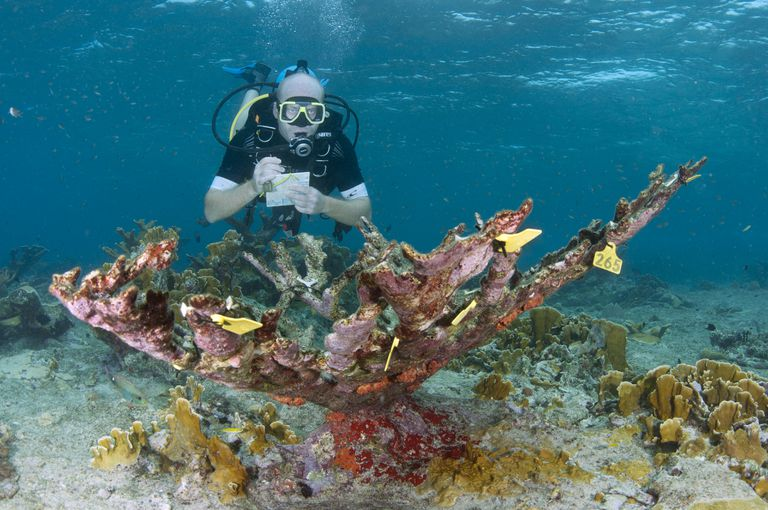 Coral Researcher making notes underwater