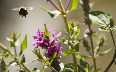 Don't Be Concerned About Ground Bees