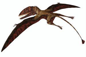 Dimorphodon on white background