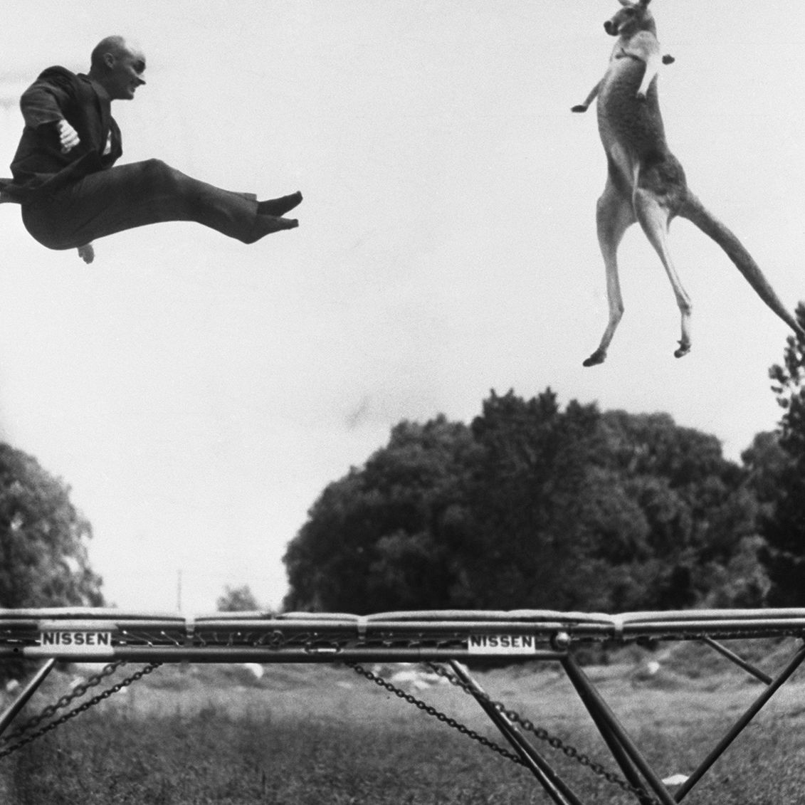 Kangaroo and man jumping on a trampoline, black and white photo.