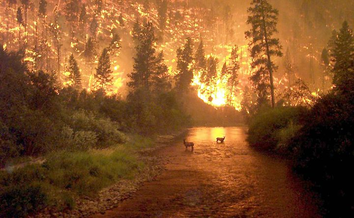 The Most Famous Wildfire Photograph Ever Taken