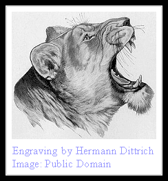 european lion