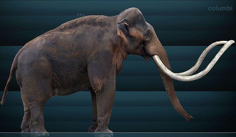 mammoth