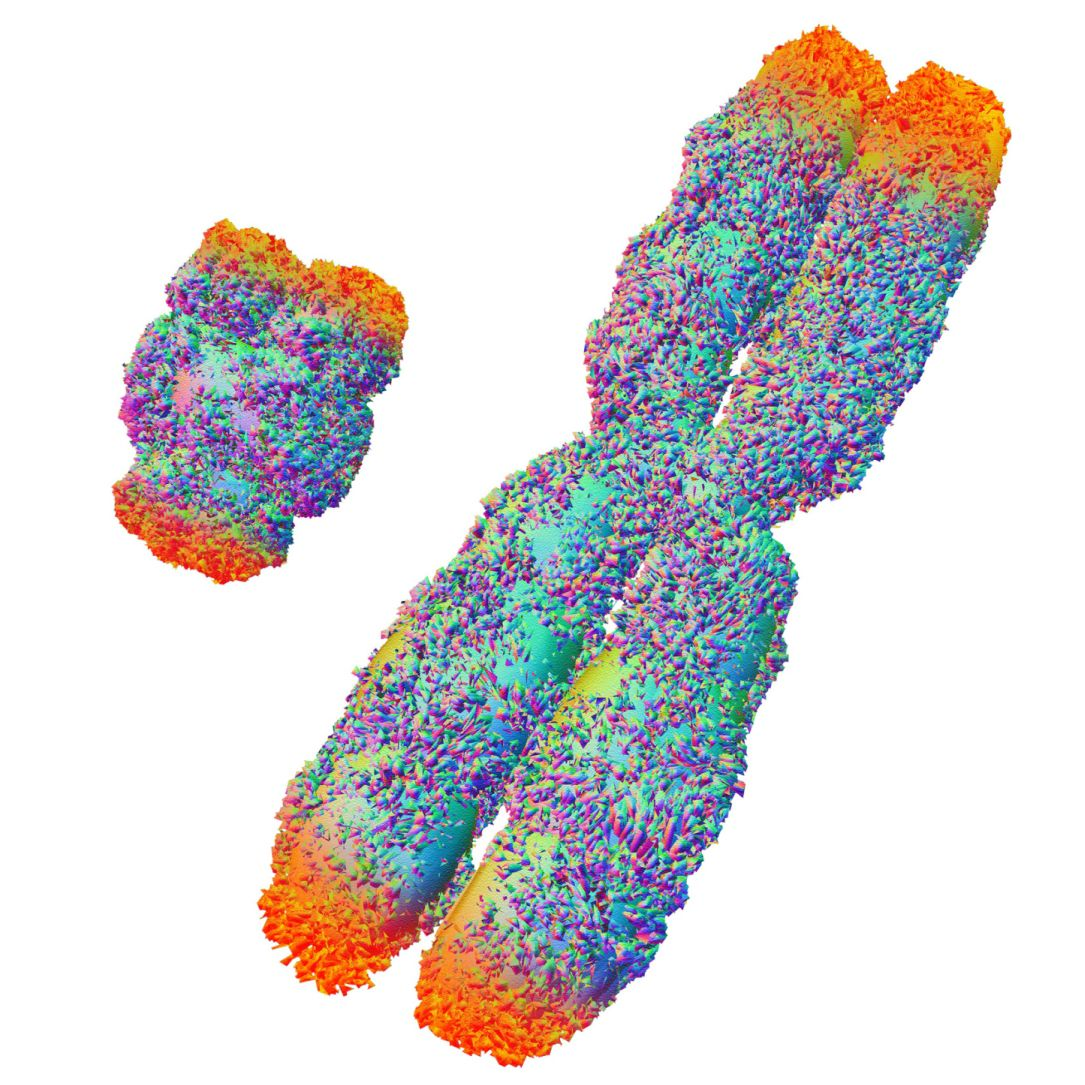 Sex Chromosome Abnormalities Historically, scientists have used a staining technique that colours the chromosomes into a banding pattern. sex chromosome abnormalities