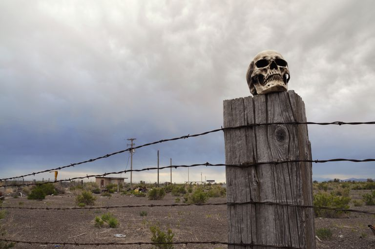 Horizontal Color Photograph of Skull on Barbed Wire Fence Post