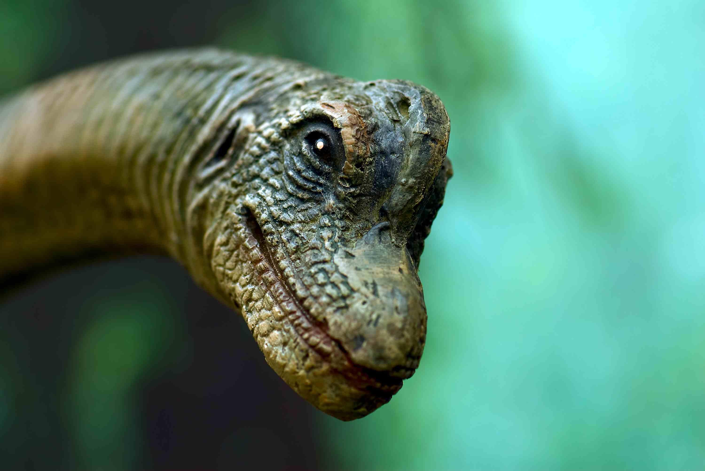Model of a n apatosaurus head