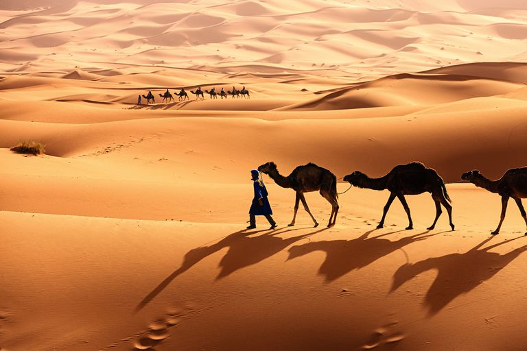Two caravans in the Sahara Desert.
