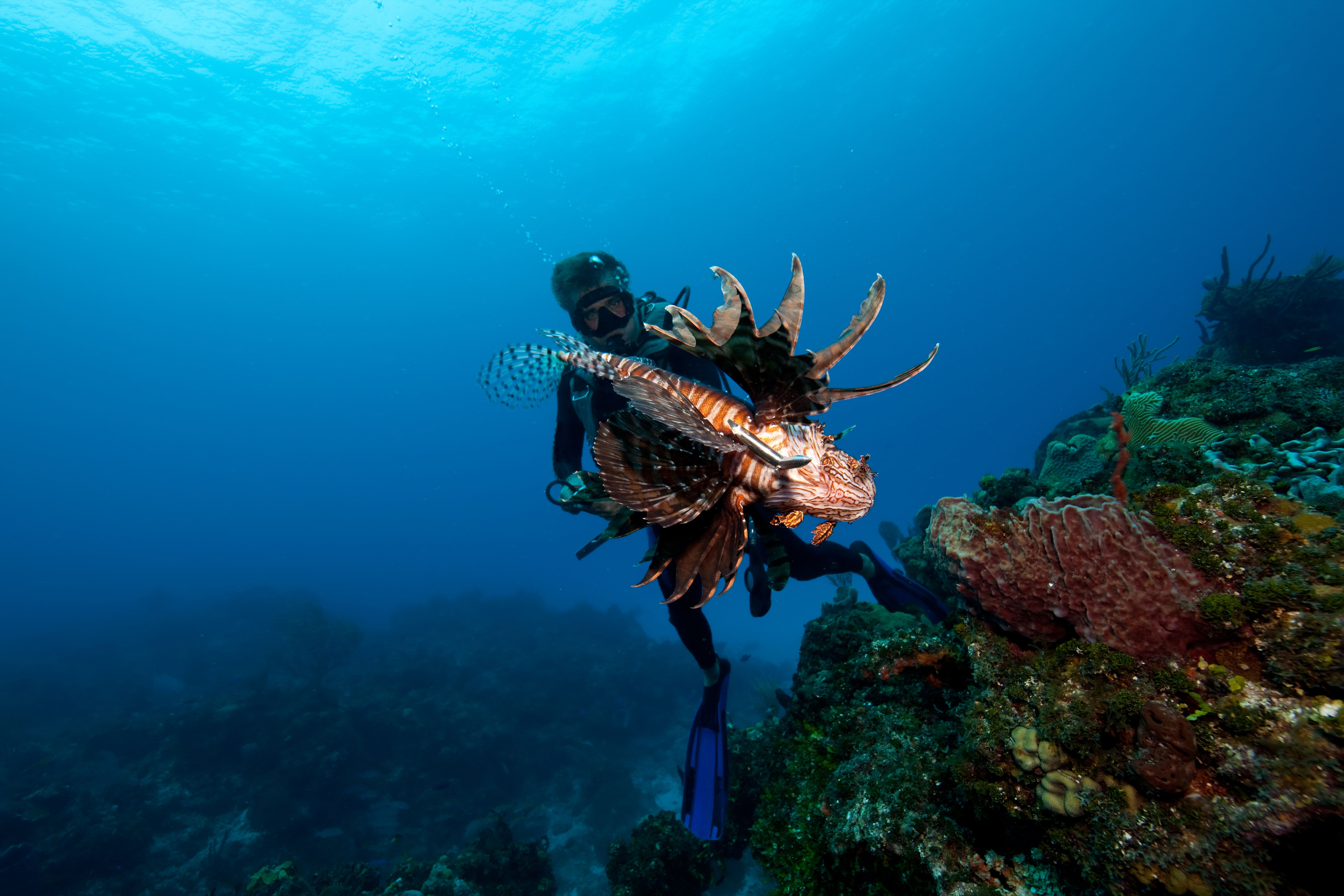 Diver and invasive lionfish