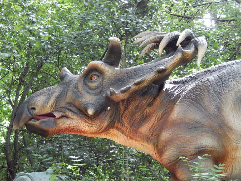 Kosmoceratops display outdoors.
