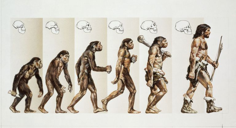 an artistic depiction of evolution