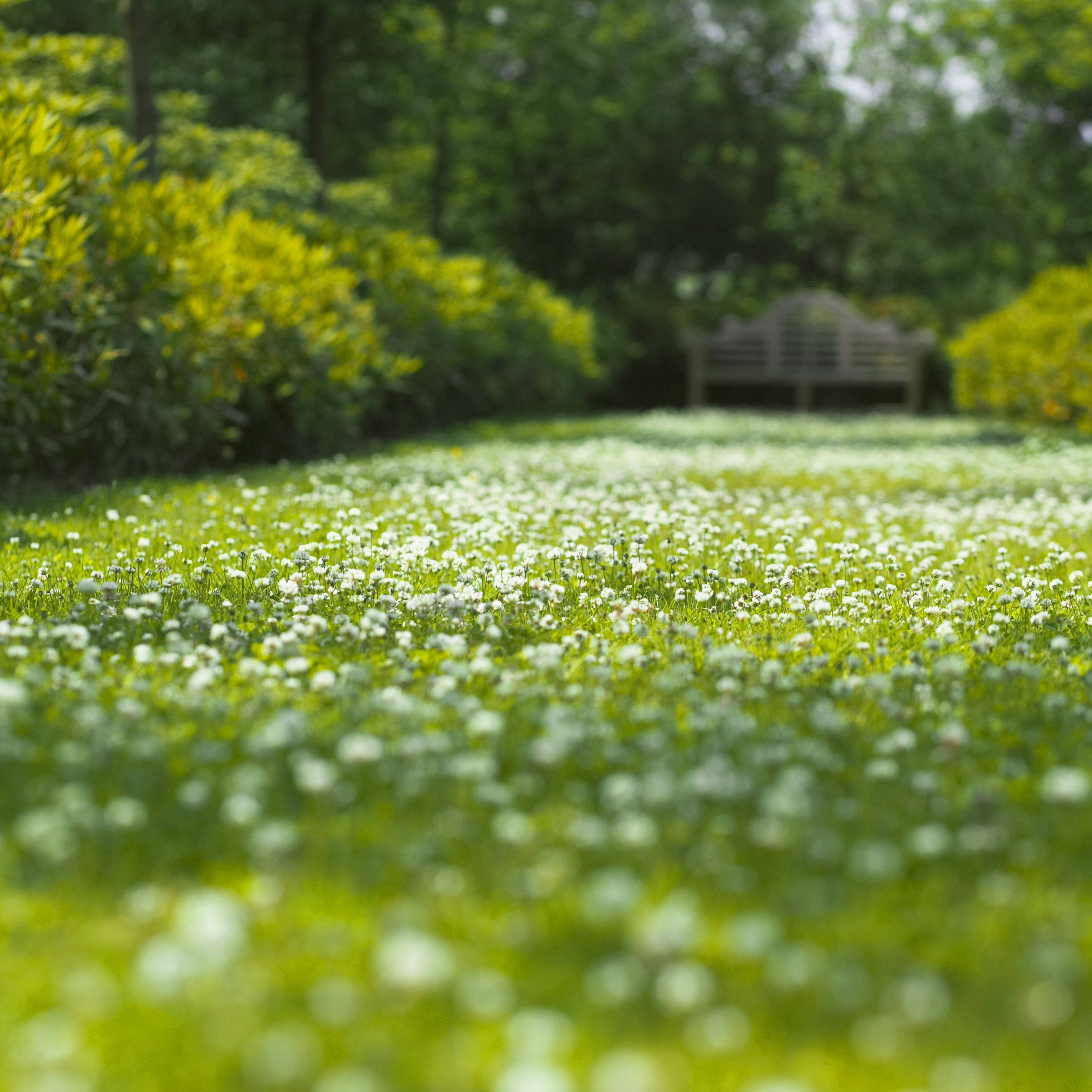 Low Maintenance Alternatives To Grass