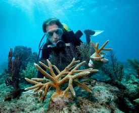 Transplanting corals to help with marine conservation