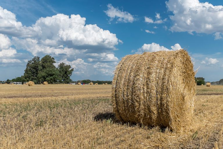 A bale of hay on a field