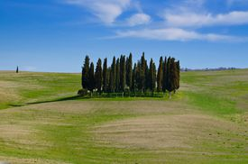 Cypress Trees Growing On Grassy Field Against Sky