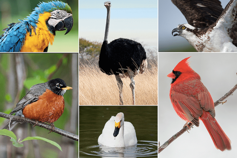 Collage of Bird Photos