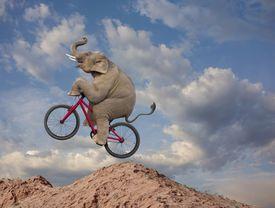 elephant analogy