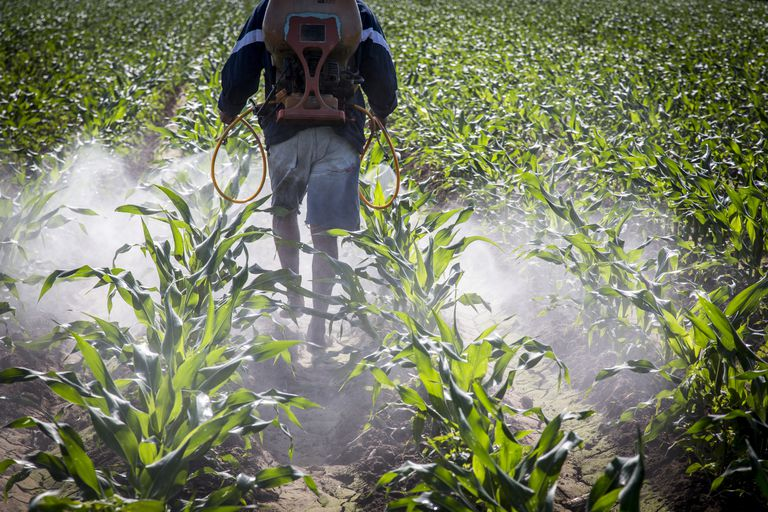 A Farmer Spraying Corn in Mexico