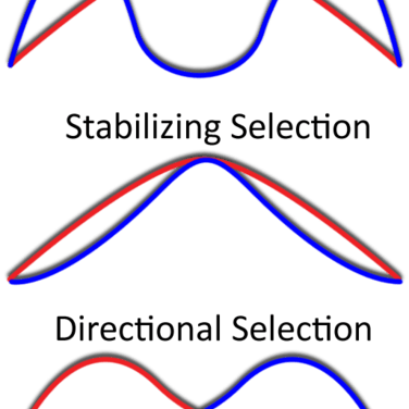 5 Misconceptions About Natural Selection Evolution