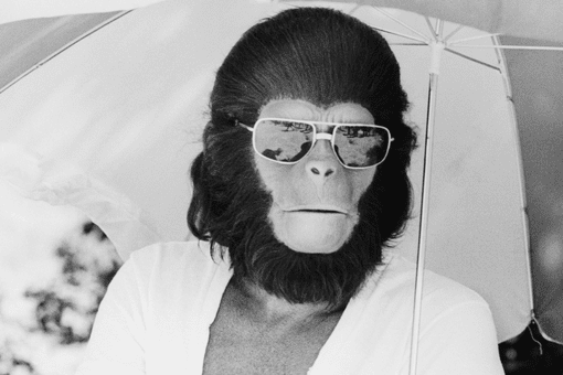 Roddy McDowall in costume for the 1968 film 'Planet of the Apes'