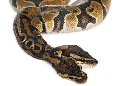 2D Game Programming in C Tutorial: Snake