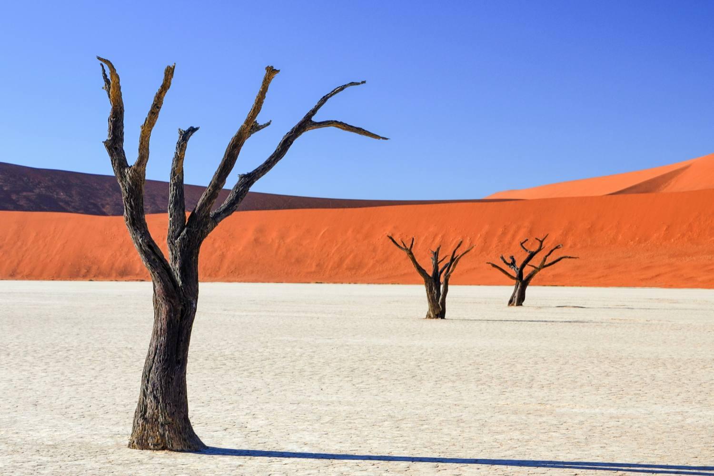 Dead Vlei Namib Desert