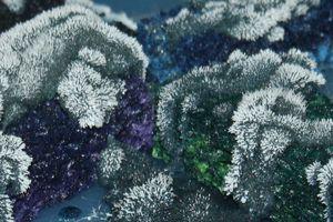 Grow a chemical crystal garden using laundry bluing, salt and ammonia.