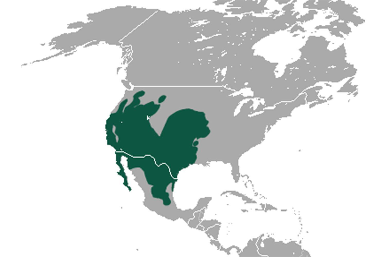 Black-tailed jackrabbit range