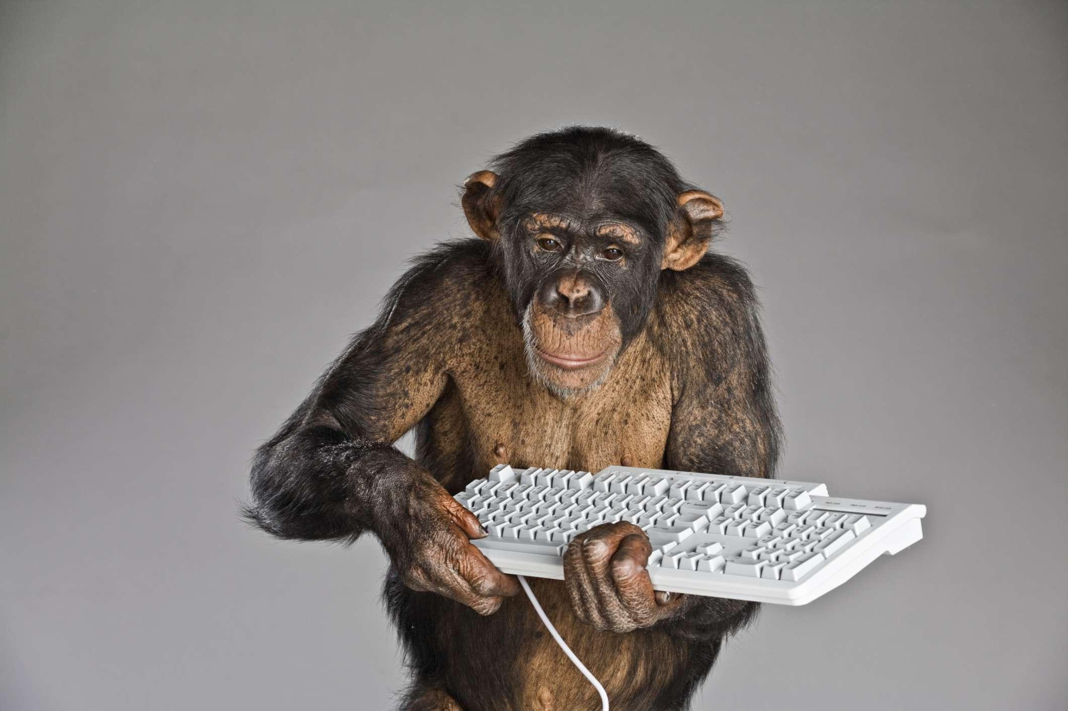Chimpanzee holding keyboard.