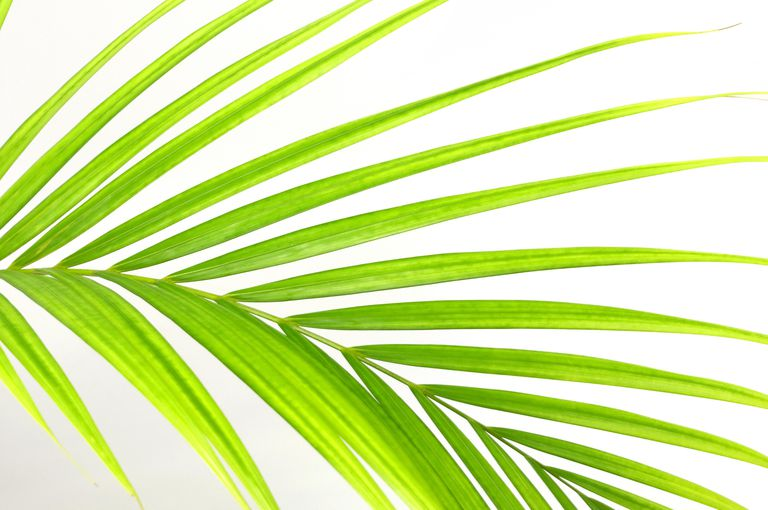 The origin of the Palmer surname has ties to palm branches.