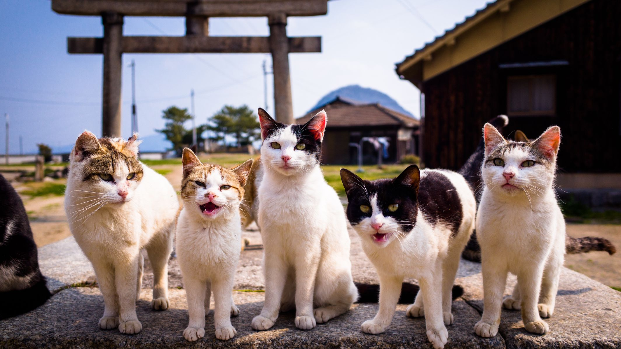 10 Animal Sounds in Japanese Words
