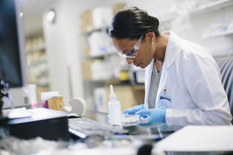 Examining a petri dish