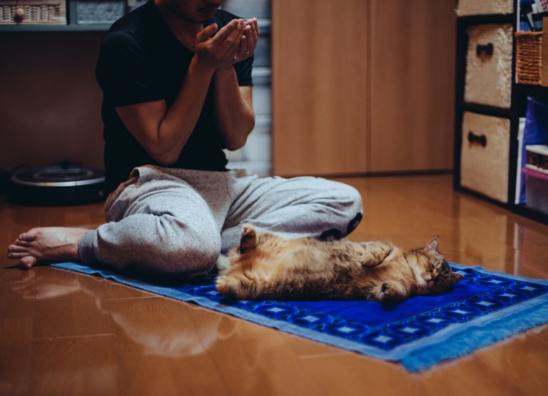 Man Praying With Cat On Mat