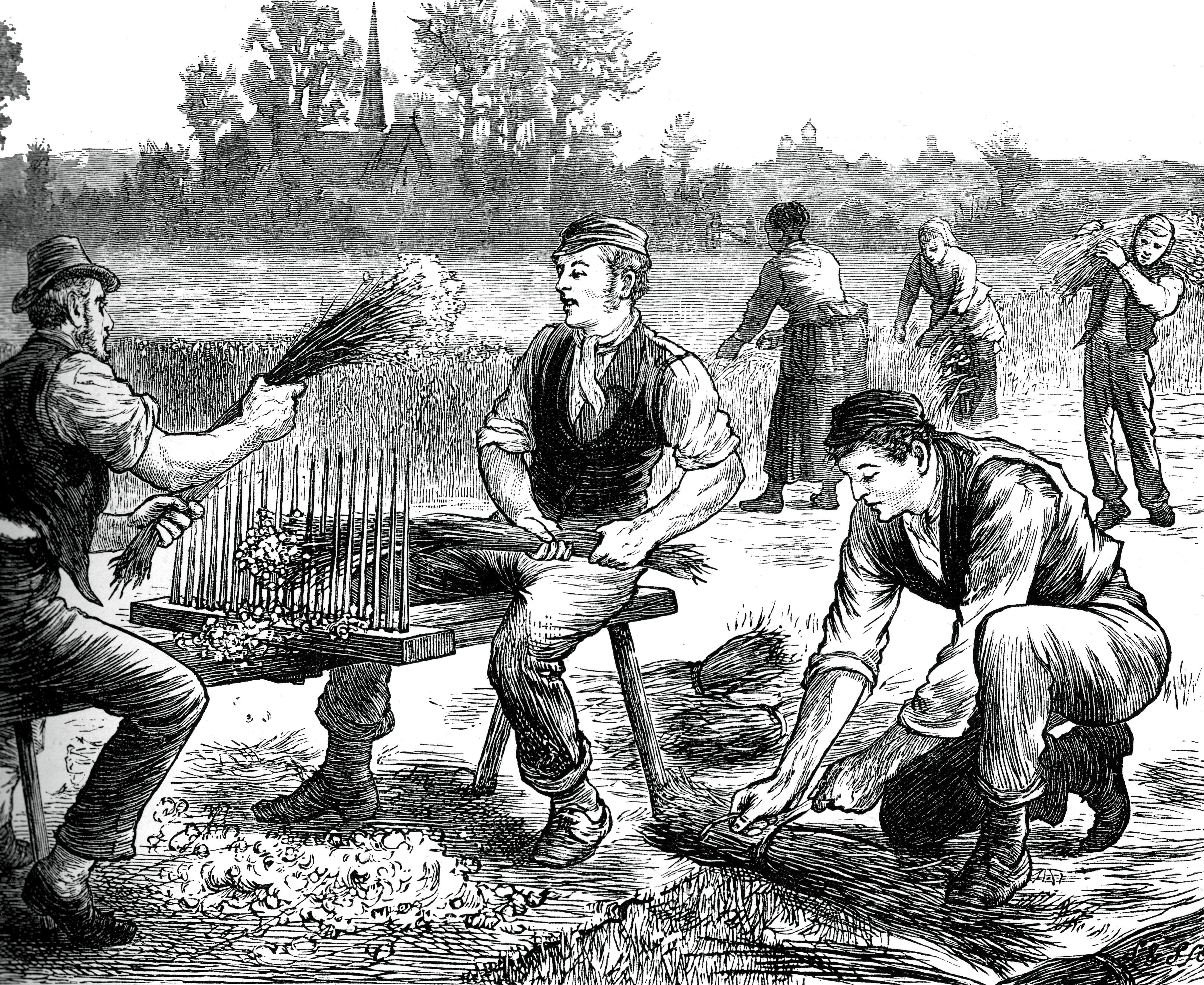 Agricultural Workers Heckling Flax, ca. 1880