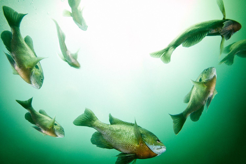 The 3 Basic But Distinct Fish Groups