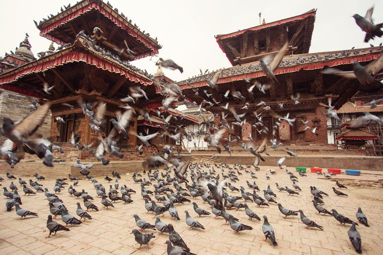Pigeons flying in the middle of Durbar Square of Kathmandu, Nepal