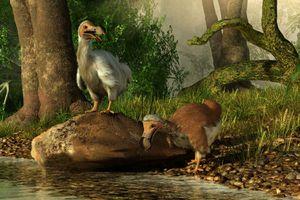 Dodo Birds at a river.