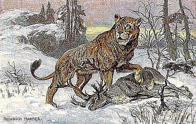 Höhle Löwe Panthera Leo Spelaea