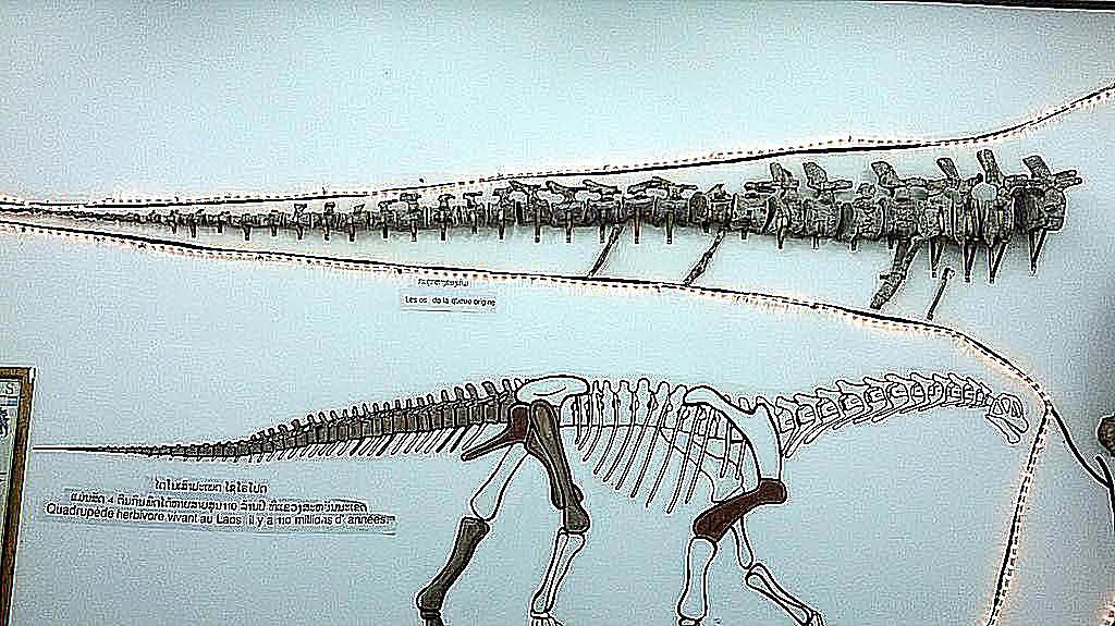 tangvayosaurus