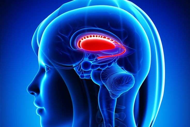 Basal Ganglia Function and Location