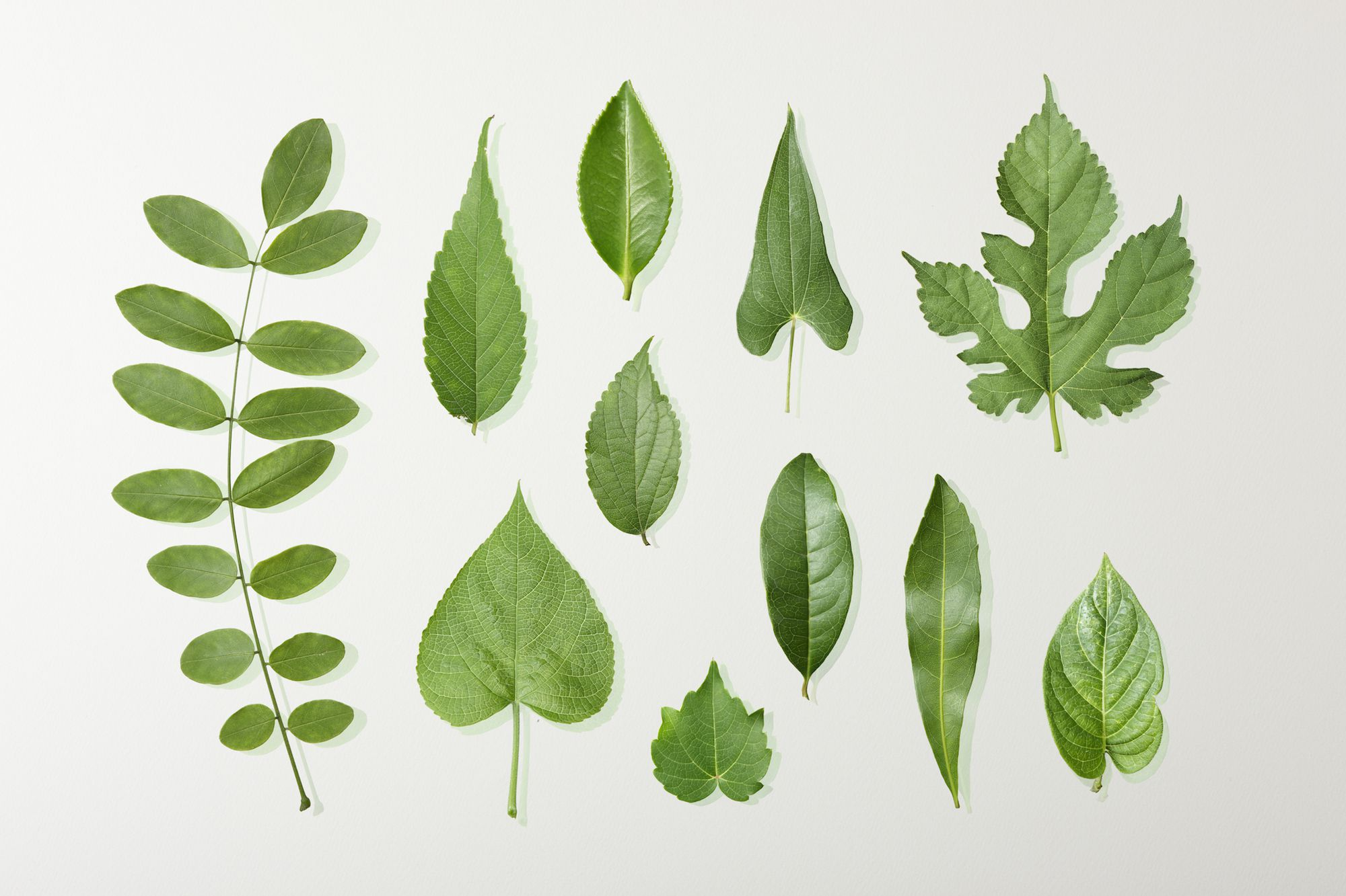 Create Your Own Tree Leaf Exhibit Or Collection