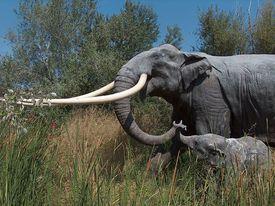 straight-tusked elephant