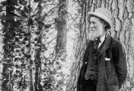 Photograph of John Muir in the woods