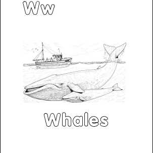 whalecolor 56afd5ae3df78cf772c