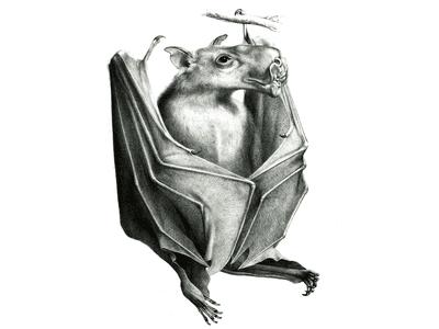 Bat Sounds: What Noise Do Bats Make?