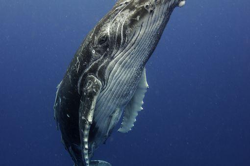 Calf Profile