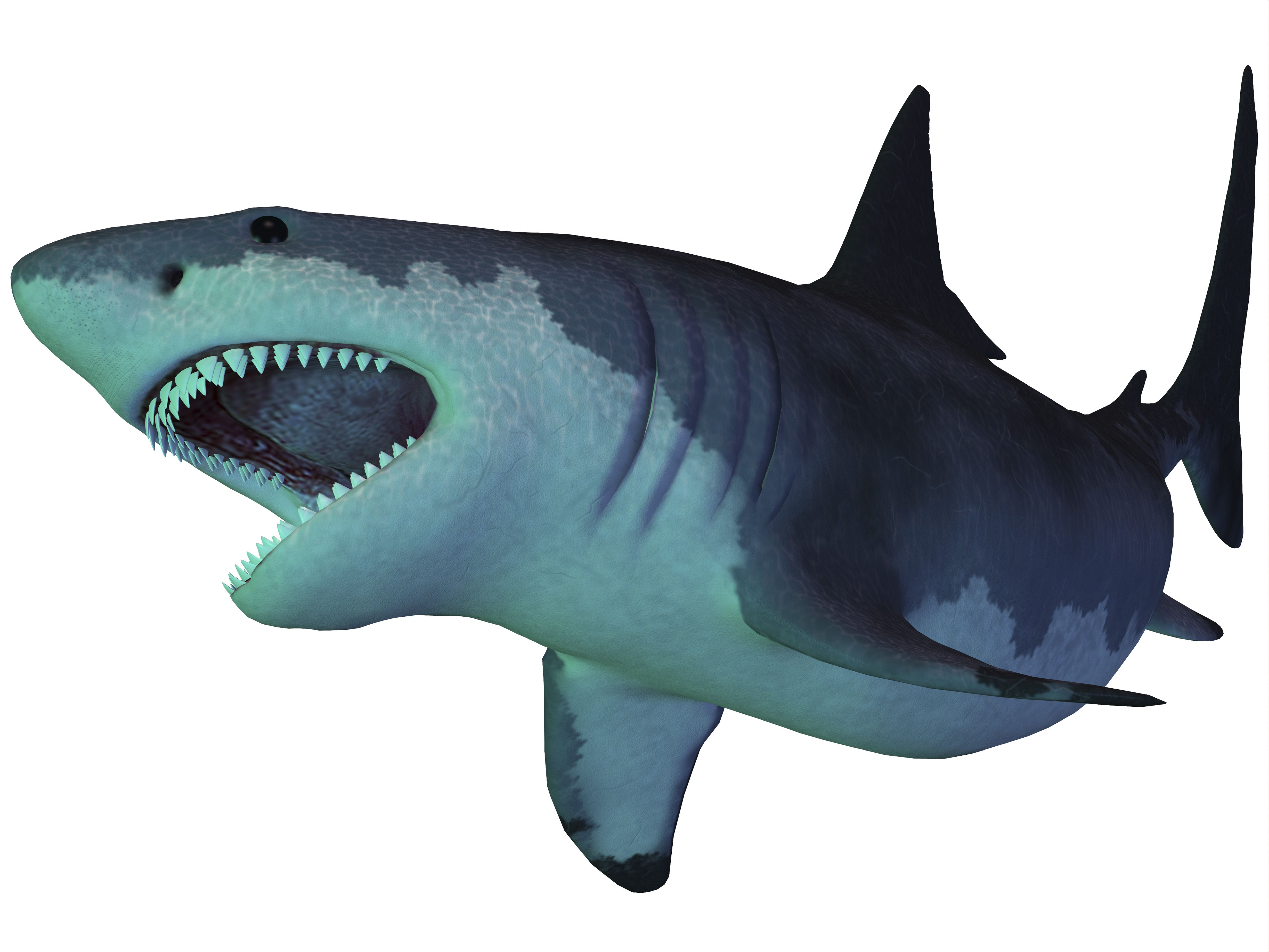 The Megalodon shark is an extinct megatoothed shark that existed in prehistoric times, from the Oligocene to the Pleistocene Epochs