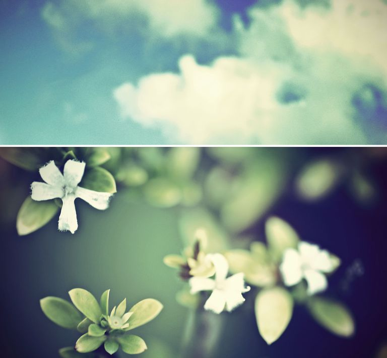 Diptych image of nature and the sky.