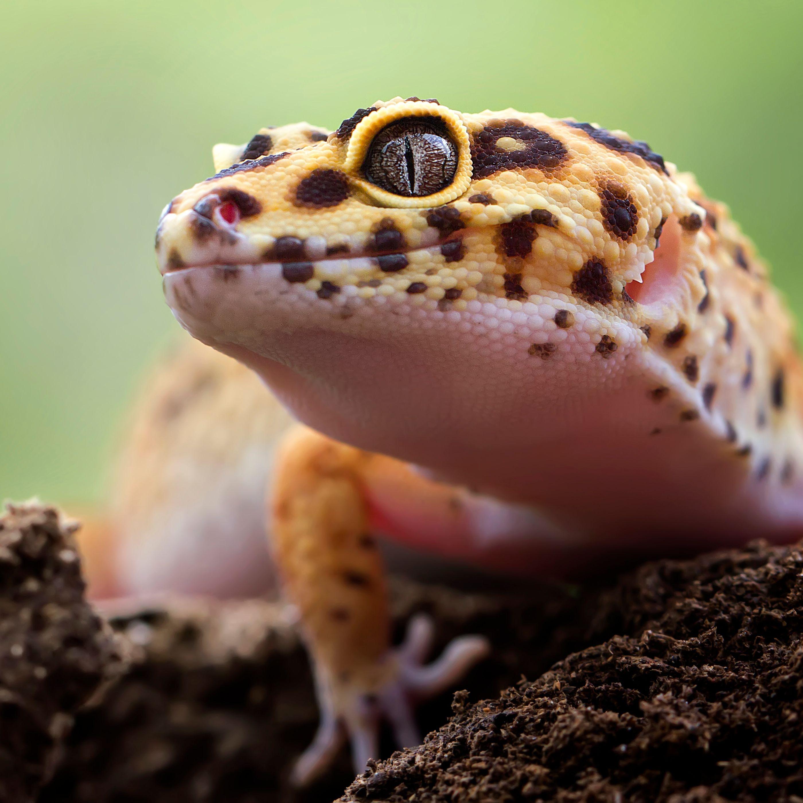 close up of lizard on field 5aa81c fa ba854