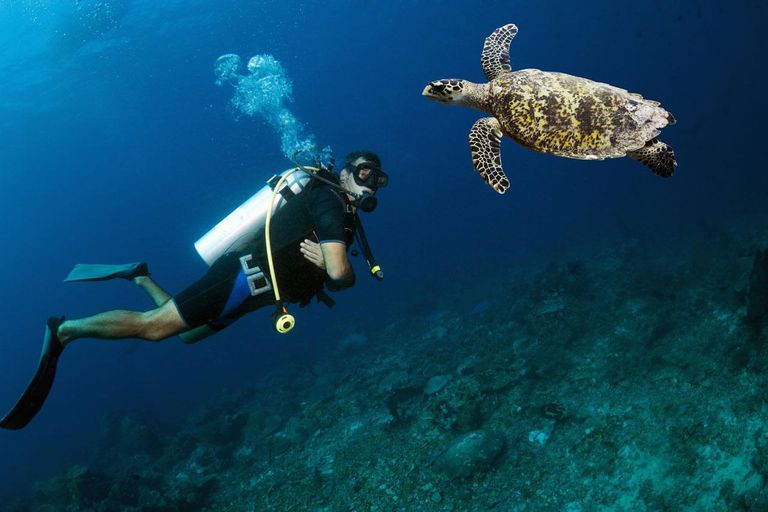Requirements For Scuba Diving Age And Fitness