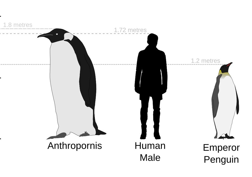Sketch of anthropornis next to a human man and emperor penguin.